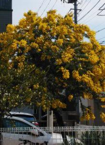 街角で咲いていました。